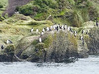 Tweede excursie, de pinguïns wachten al op ons.