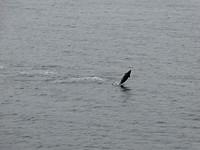 Tussen eerste en tweede excursie: dolfijn danst langs!