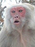 Aggressive Monkey on Monkey Island
