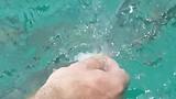 Snorkelen tussen de vissen