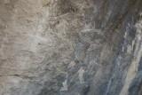 De oudtste aurochs zijn 15000 jaar oud.