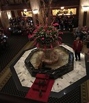 Walk of the ducks in Peabody hotel