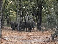 In de laatste week toch nog olifanten gezien