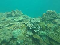 Duiken Turtle Island