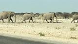 Olifanten familie onderweg