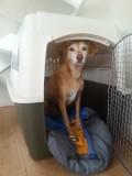 Mara oefent alvast in haar nieuwe bench :)