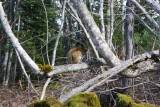 Squirrel in Parc du Bic