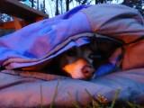 Mara lekker warm voor het kampvuur