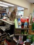 De winkelkat