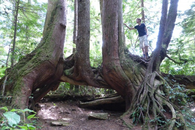 Bijzondere boom