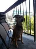 Mara inspecteert het balkon