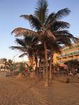strand onder de palmbomen