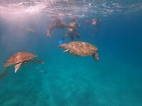 Zwemmen met schildpadden