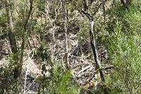 Overal in het bos zoveel oud droog hout. Ideaal voor een bosbrand
