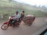 varken achter aan de scooter.. waarom ook niet?