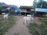 standaard Cambodiiaans dorpje