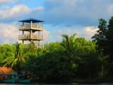 uitkijktoren in de mangrove