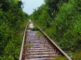 bamboe trein