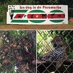 Links de kanonkogelboom en de penitigri de jaguar rechts.