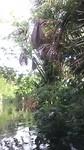 Kayakken in the bush . In het district Para.