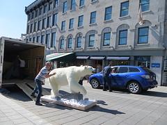 onze eerste ijsbeer