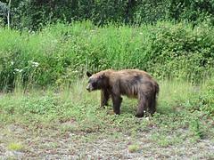Grizly Fonzie Bear