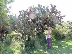 Cactus met Ineke