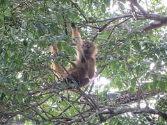 aapje boven de Iveco