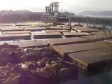 Sealions / Fishermans Wharf