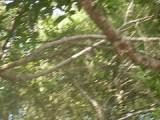 De neushoornvogels
