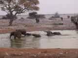 olifanten bij waterpool Okaukuejo
