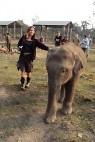 Olifanten-opvang