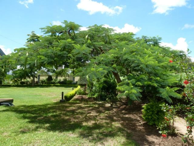 Bomen In Tuin : Mooie boom onder die boom is het mooiste plekkie vd tuin vind