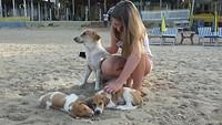 Saphier de hondenvriendjes