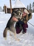 Husky knuffelen