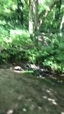 Het enige stukje bos (300 meter) in 2 dagen