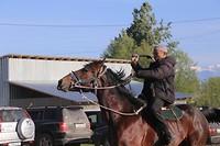 dierenmarkt paard Maximus