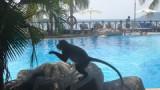 Ze springen bijna in het zwembad