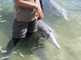 Dolfijnen voeren