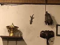 Pai (gekko)
