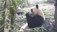 Pandacentrum
