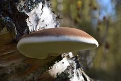 Mooie paddenstoel nr. 2