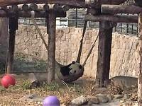 Pandas (2)