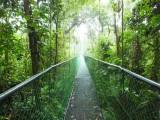 De brug vanuit de kant van het regenwoud.