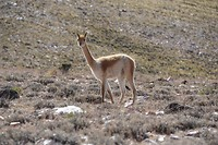Alpaca, or you name it (iets in die richting)