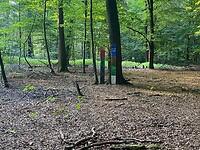 Waldfriedhof Börstel.