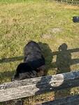 Één van de lieve honden die op de schapen past.