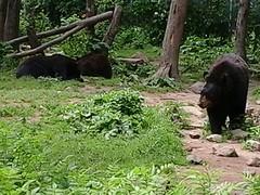 De eerste beren en hoe