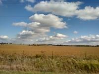 Mais velden