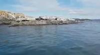 De zeeleeuwen en zeehonden